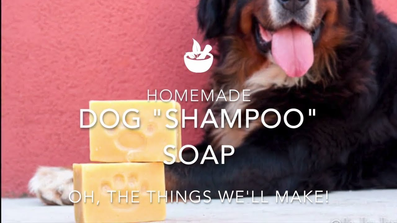 Homemade Dog Shampoo Bar Soap