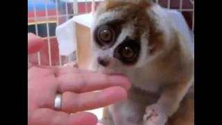 le plus mignon des animaux !