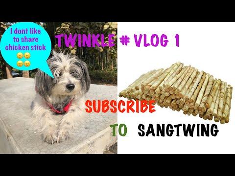 LHASA APSO DOG ......ANGRY TWINKLE...#VLOG.1