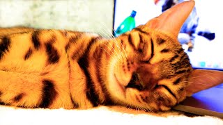 Cute video on YouTube with a cat Murka sleeping!