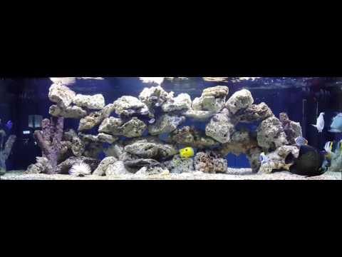 Marine Aquarium • 30 Minutes of Peace • 4K • Classical Music •07-17-16 Sunday