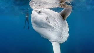 The Largest Fish Ever Found By Divers