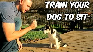 How to Train Your Dog to Sit - Dog Training