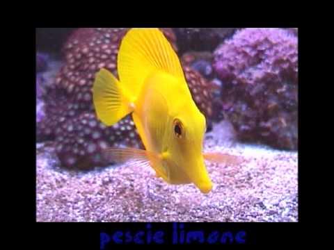 I pesci pi belli youtube - Pesci piu comuni in tavola ...
