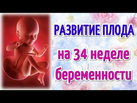 Развитие плода на 34 неделе беременности/Календарь беременности!