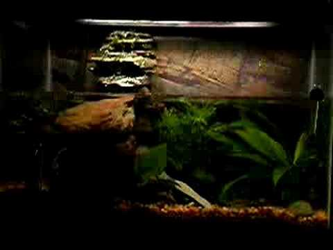 Waterfall fish tank youtube for Waterfall fish tank