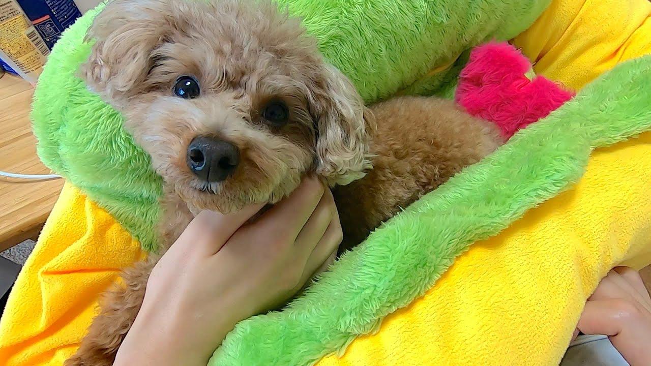 くる を 犬 て おしり つけ 犬が甘えるときの10の仕草。甘える理由や犬の気持ち、サインも