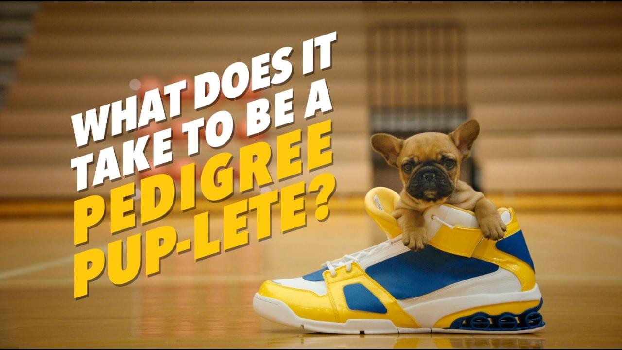 PEDIGREE® PUP-LETES: Tiny Sneakers