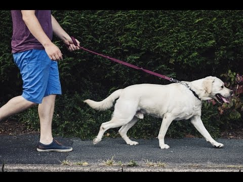 Dog Walking Training RULE #1!  Friendly Dog Owners MUST Watch This!