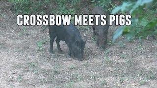Texas Crossbow Hog Hunting