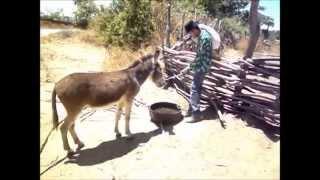 A Vida do Viajante - Luiz Gonzaga . Em Novo Oriente - Ceará