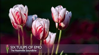 6 TULIPS OF EMO - TINY SPEAKS OF HER MOTHER