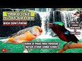 Masteran Konin Nembak Kenari Sambung Jangkrik  Mp3 - Mp4 Download