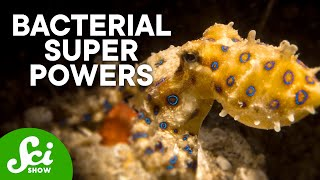 5-of-the-coolest-partnerships-between-animals-and-bacteria
