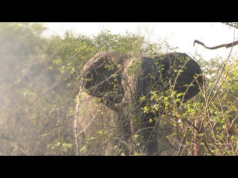 Elephant Hunting in the Caprivi Namibia by the Best #2