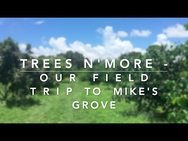 TREES N' MORE : OUR FIELD TRIP TO MIKE'S GROVE