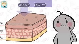【柴知道】紫外线如何催人老?How does UV make people feel old?