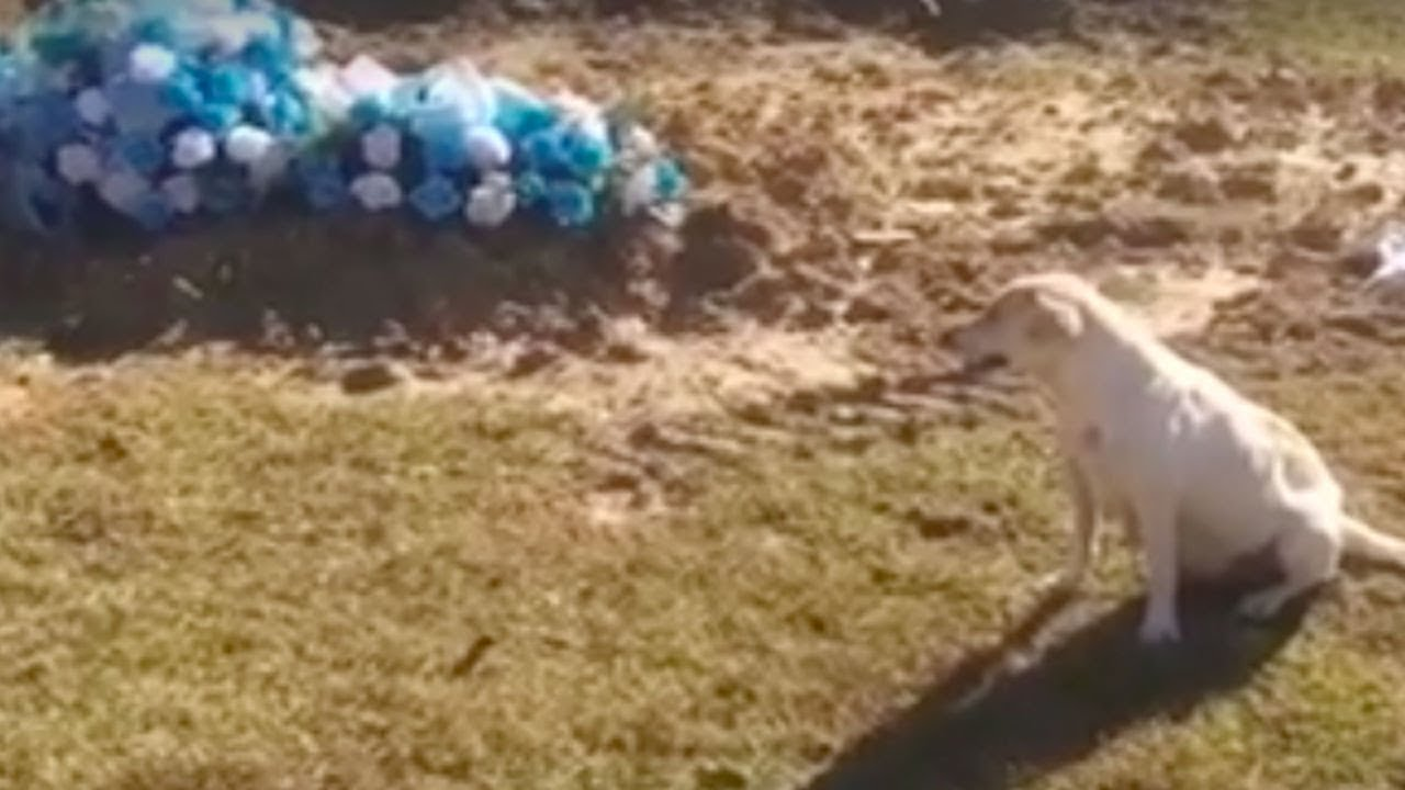 a-stranger-saw-this-dog-at-a-grave-covered-in-blue-roses-and-soon-solved-a-town-mystery