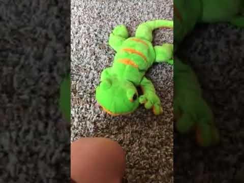 Animal fighters Gecko VS snake