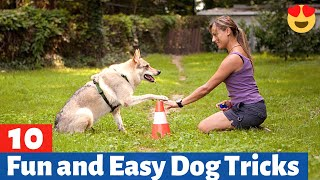 10 Fun and Easy Dog Tricks to Perform with your Dog (MUST TRY)