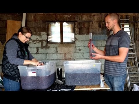Making Red Wine from Grapes - Part 1