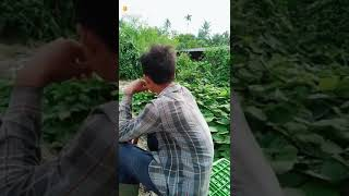 Download Video Pelaku pemerkosaan kambing MP3 3GP MP4