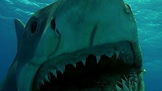 Стоит ли смотреть фильмы Челюсти? Легендарные фильмы об акулах