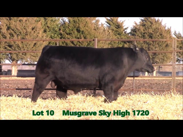 Musgrave Angus Lot 10