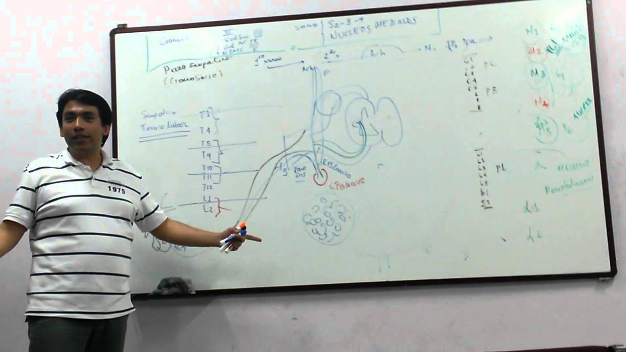 neuroanatofisiologia Dermatomas Ivan - YouTube