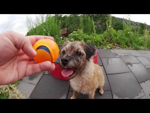 Chuckit Hydro Squeeze Ball bei Sporthund