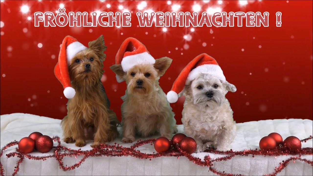 Irische Weihnachtswünsche.Fröhliche Weihnachten Ein Weihnachtsgruß Nicht Nur Für Tierfreunde