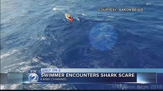 Caught on camera: Sharks join woman on Kaiwi Channel swim