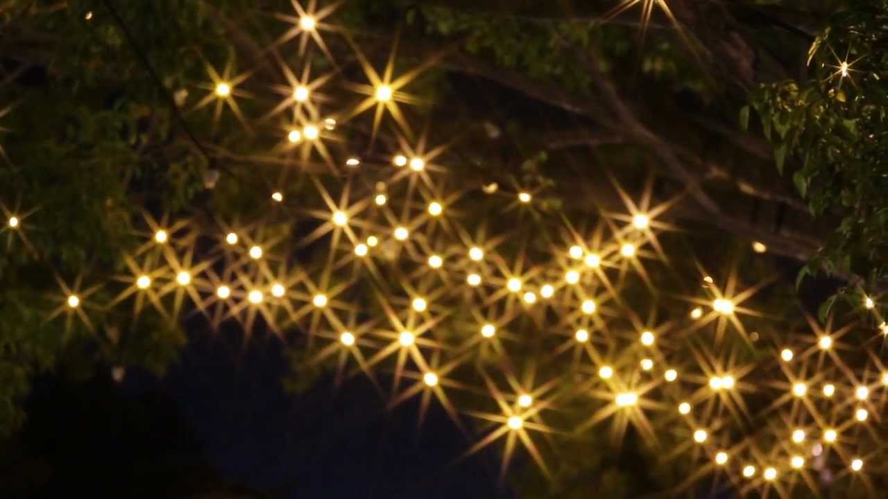 Firefly Led Festoon Lights With Warm White Fancy Rounds Cool Strobes Sparkle Mov You
