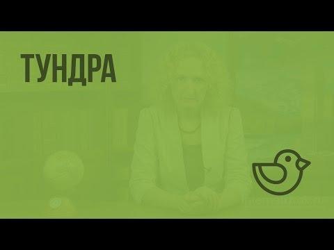 Тундра. Видеоурок по окружающему миру 4  класс