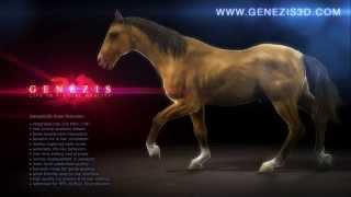 Animierte CG-Pferd - GENEZIS 3D