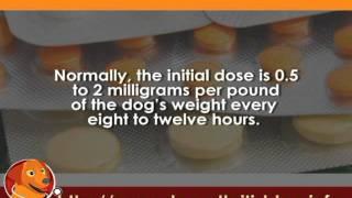 Prescription Painkillers for Dog Arthritis User Guides Part 4 - amitriptyline