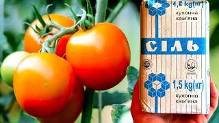 Дайте томатам в августе соль! Опытная соседка так делает 30 лет ее томаты мясистые и сладкие!