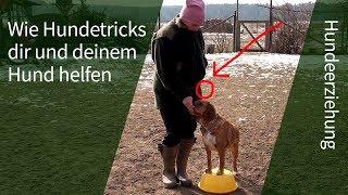 Hundetricks ► Wie einfache Hundetricks dir dabei helfen, Probleme bei der Hundeerziehung zu lösen!