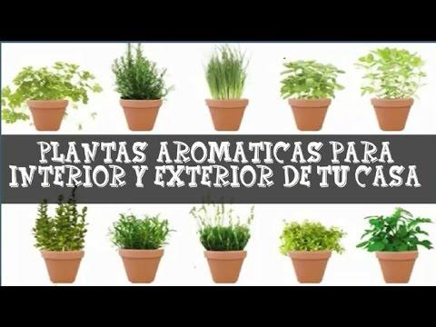 Plantas aromáticas de interior y exterior de casa