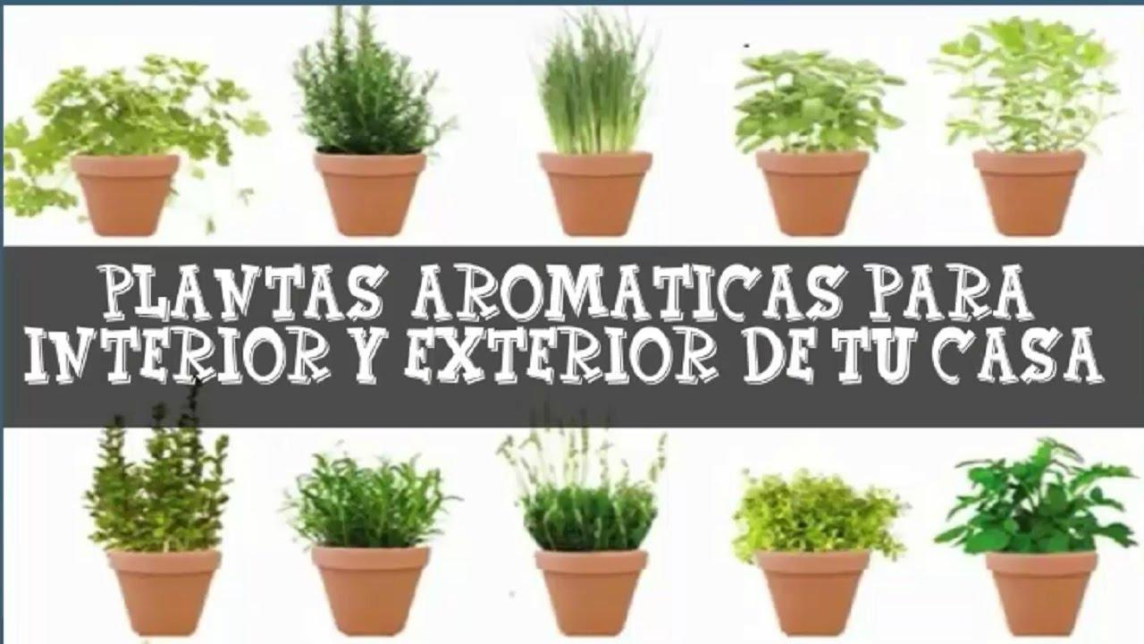 Plantas arom ticas de interior y exterior de casa youtube for Plantas de exterior