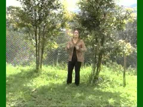 Semilla de Odio - Katrína de Colombia( Soffy Martínez)