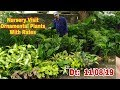 Nursery Visit, Ornamental Plants With Price, Indoor Outdoor both, by Garden Gyan