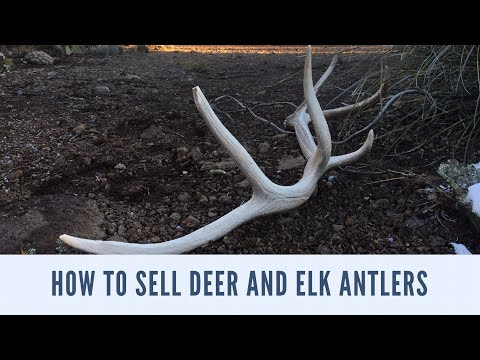 HOW TO SELL DEER AND ELK ANTLERS Shed Year Vlog Episode 48