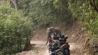 Elephant Charge On Gypsy (Corbett National Park, January 2017)