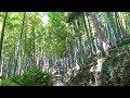 駅からハイキング・JR横浜線小机駅(Kozukue)[其の一] の動画、YouTube動画。