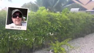 Сейшелы январь. Отдых на Сейшелах(ЗАРАБОТАЙ 900$ В ПЕРВЫЙ МЕСЯЦ БЕЗ ВЛОЖЕНИЙ ♛♚♛ → http://cp.club-mlm.com/u/marina♛♚♛✓☑ Обращайтесь прямо сейчас! Skype:..., 2014-05-02T10:16:50.000Z)
