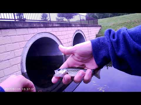 Micro Fishing Windsor Lake