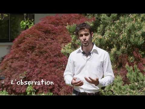 Comment protéger et soigner son jardin au naturel : Le biocontrôle, c'est quoi ?