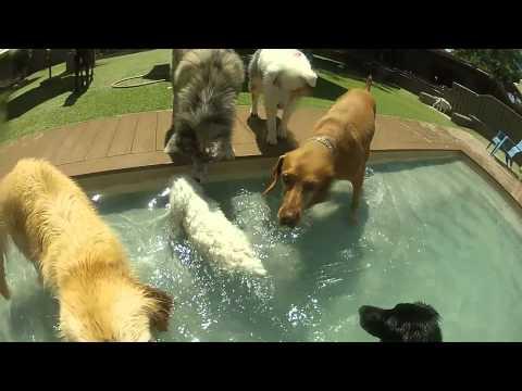 The Dog Ranch Laguna Beach Pool Party