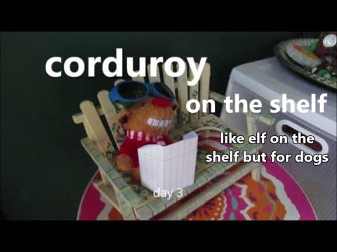 Corduroy on the shelf 11.11.19 Day 2329